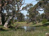 Billabong-at-Sale-Wetlands