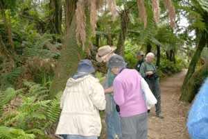 Checking ferns